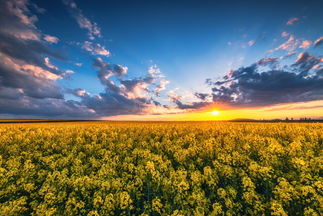 """Sunrise over the rapeseed field, beautiful spring day."" stock image"