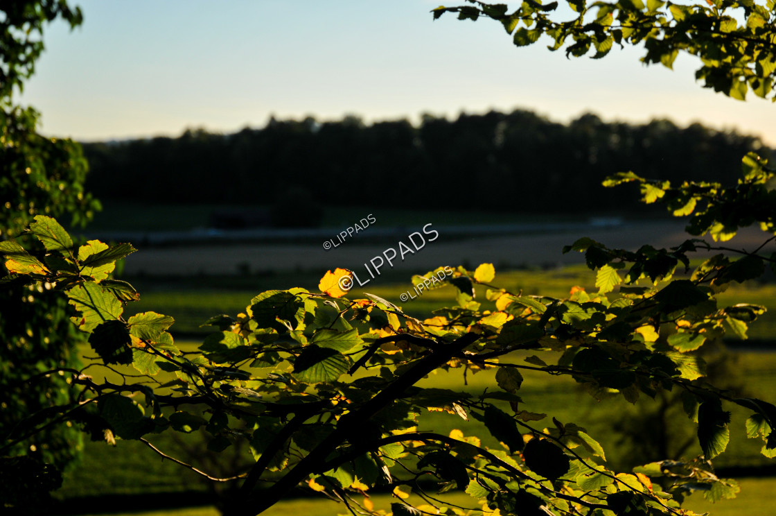 """""""Trees and Fields"""" stock image"""