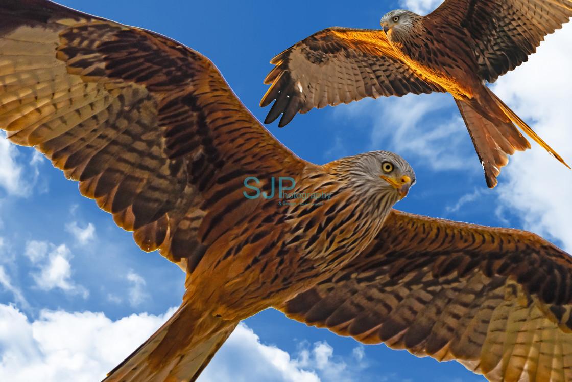 """Red Kites Blue Sky"" stock image"