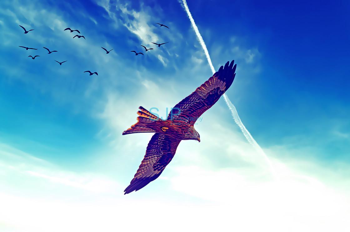 """Red Kite in Flight with Birds Digital Art"" stock image"