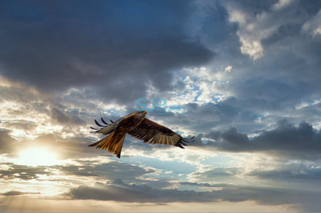 """""""Red Kite Swooping down with dramatic Sky"""" stock image"""
