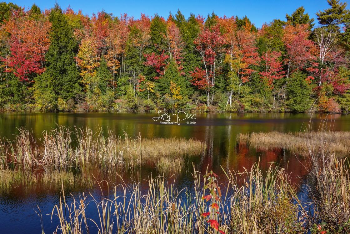 """Autumn Wetlands"" stock image"
