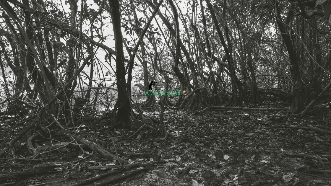 """Swamp Lands"" stock image"