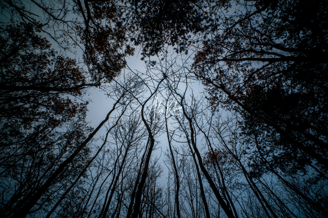 """""""Trees and Sky"""" stock image"""