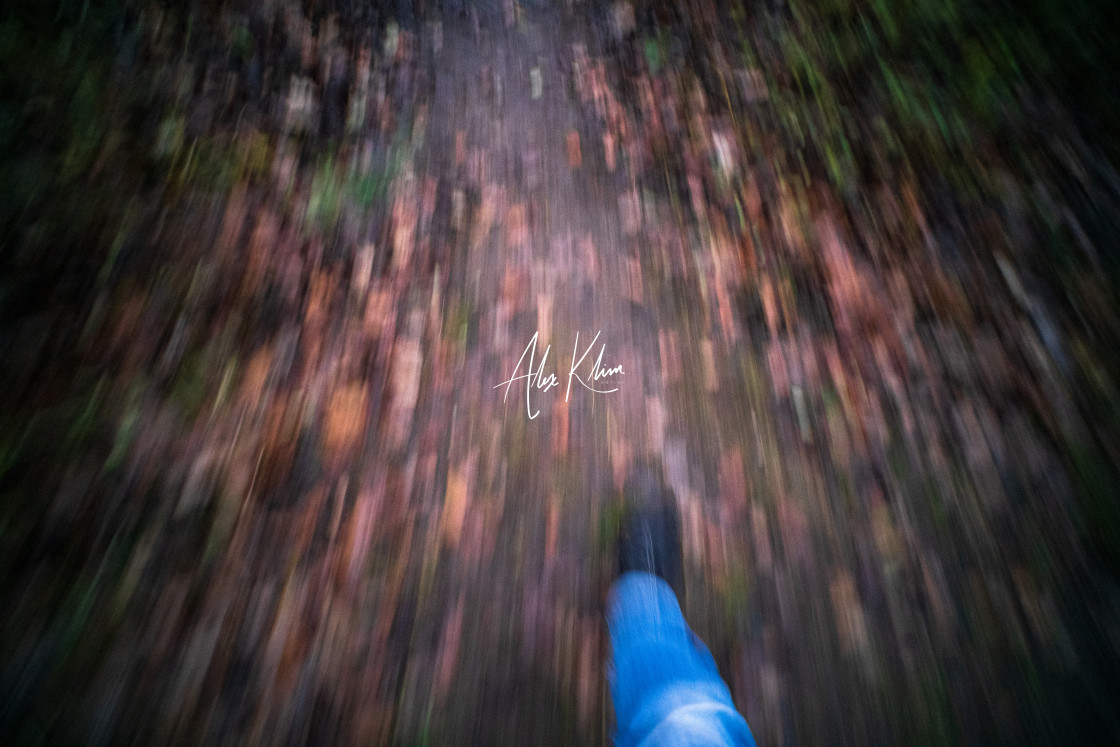 """Forest Walk Motion"" stock image"