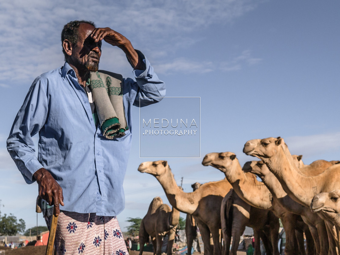 """At the camel market"" stock image"