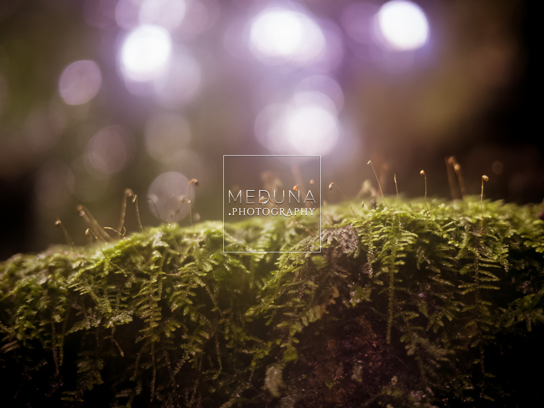 """Fern after rain"" stock image"