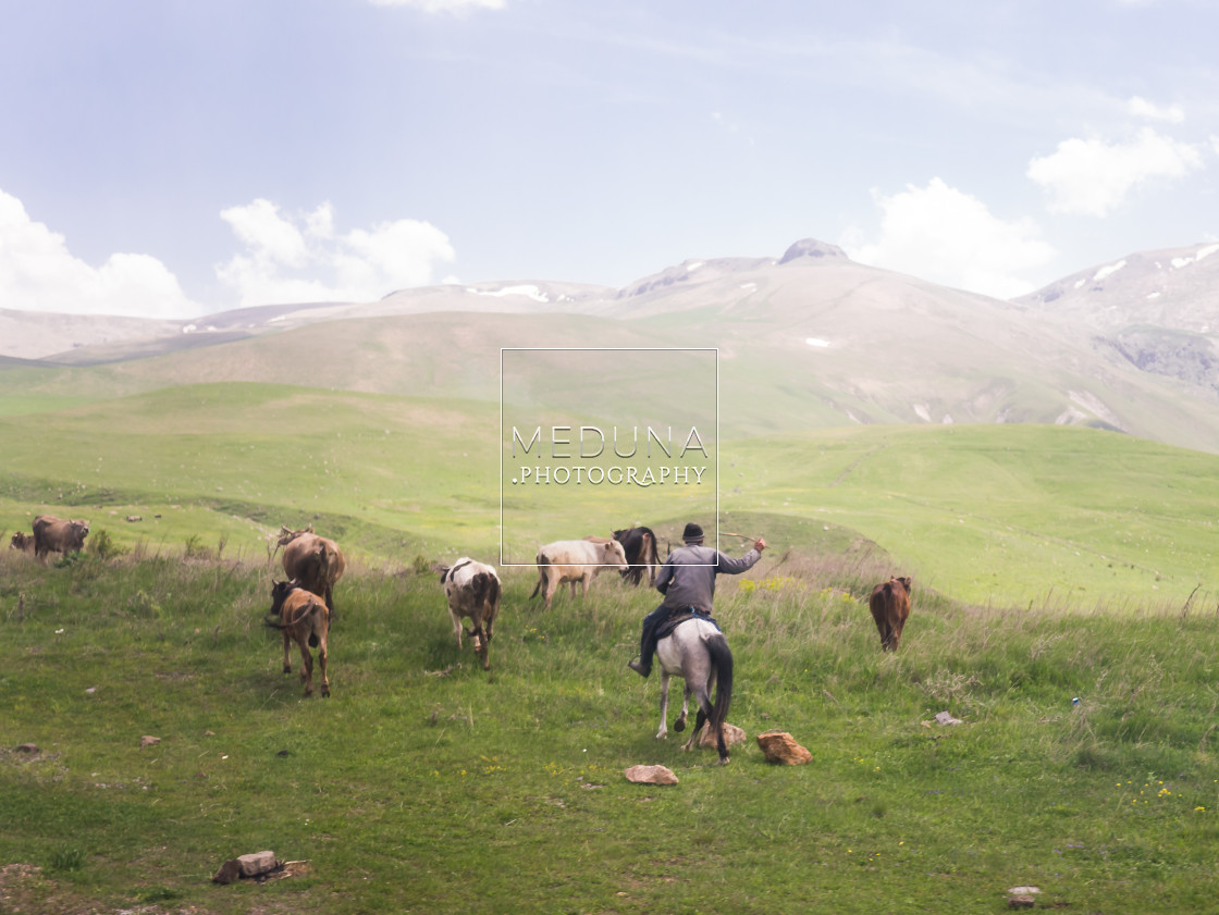 """The herder"" stock image"