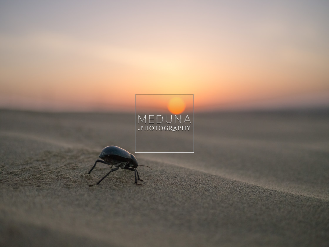 """Beetle at dawn"" stock image"