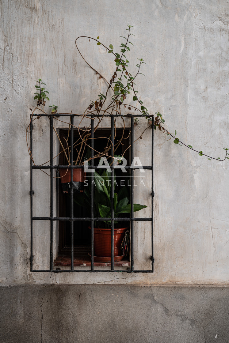 """Overgrown plant in the window"" stock image"