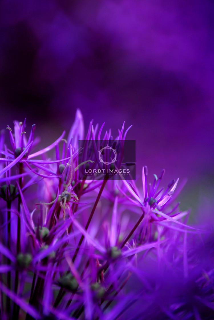 """A Strange Perfume"" stock image"