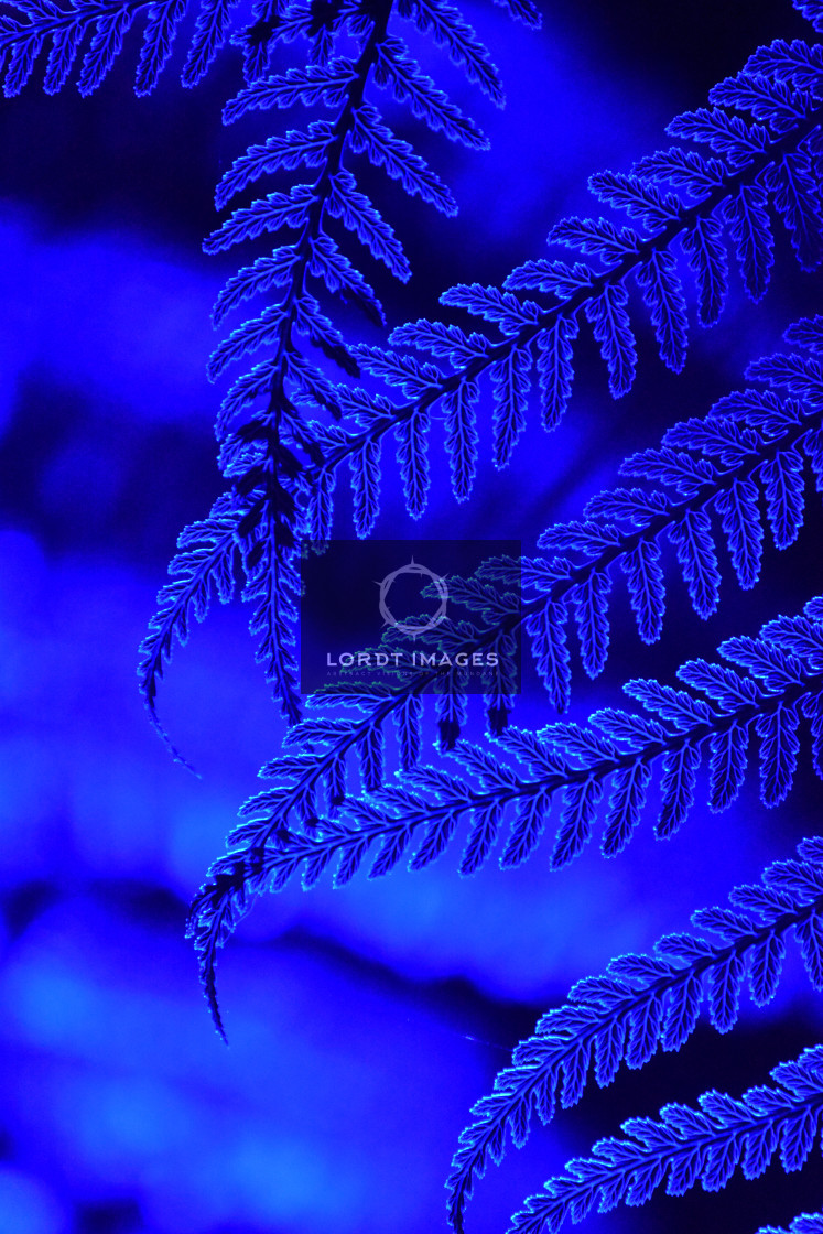 """""""Fractals in Sapphire"""" stock image"""