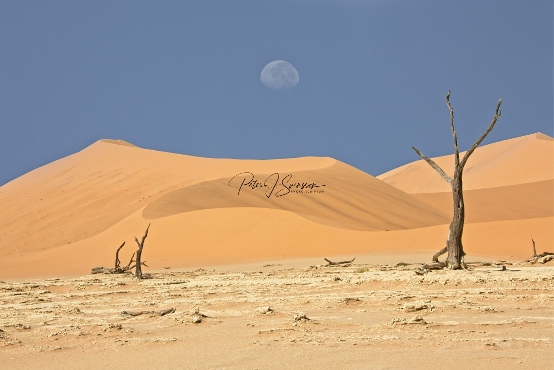 """1145C - Namibia: Sossusvlei / Deadvlei: moon drop with a triple branch at the left"" stock image"