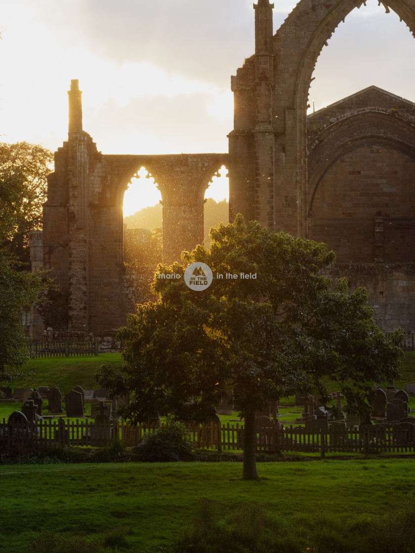 """Golden hour in Bolton Abbey"" stock image"