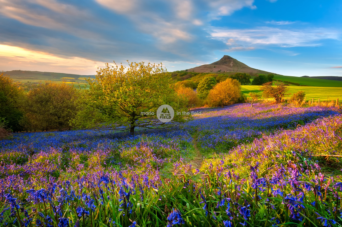 """Golden hour @ Roseberry Topping"" stock image"