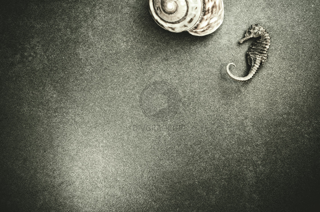 """seashell on a stone surface"" stock image"