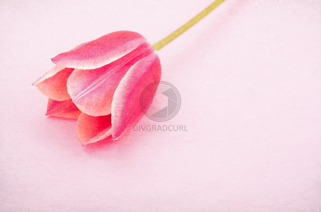 """flowers still life backdrops"" stock image"