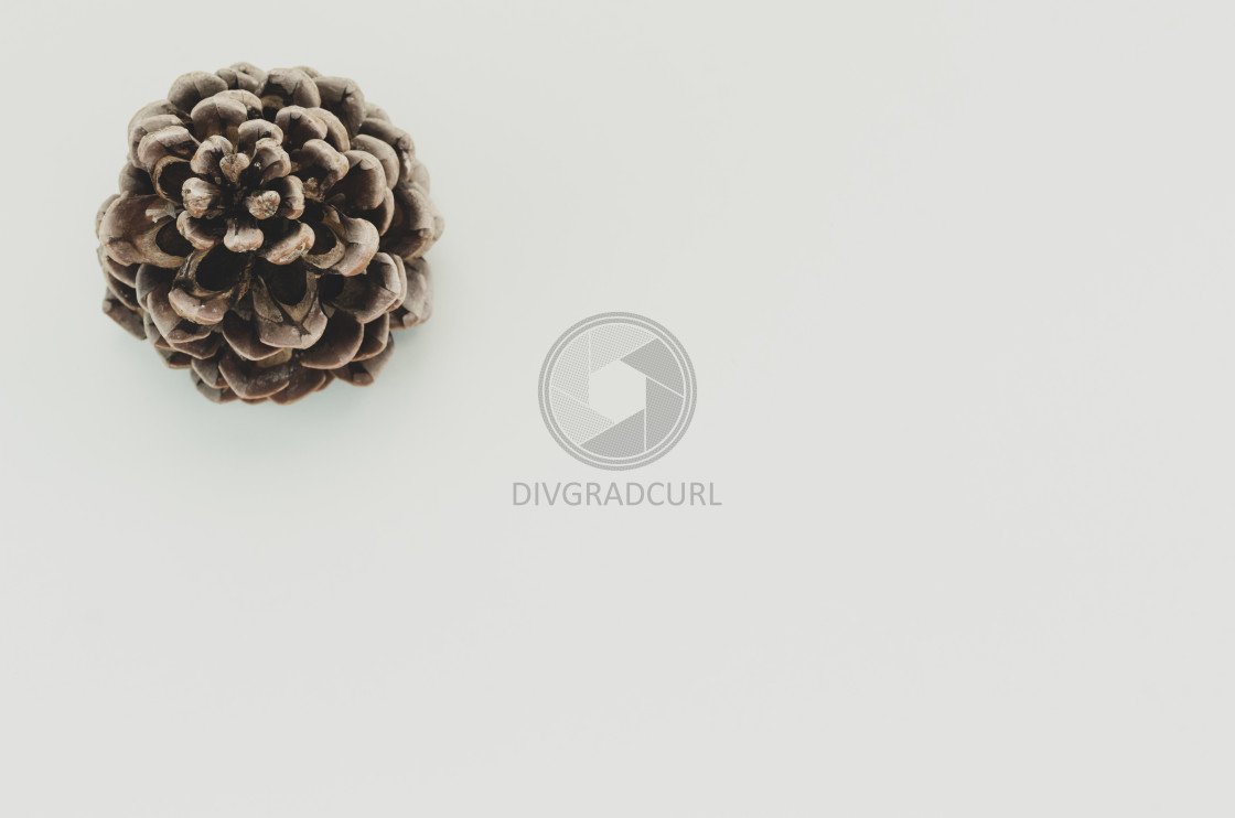 """""""pine cone on a blank surface"""" stock image"""