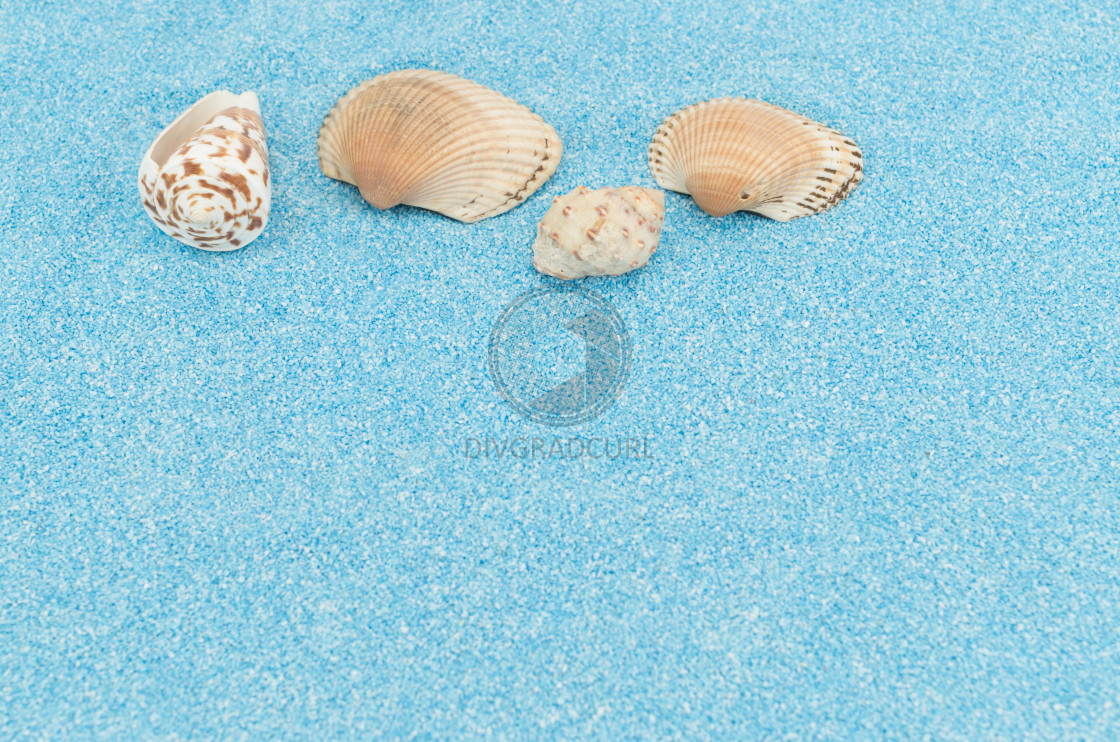 """sea shells on a turquoise sand background"" stock image"