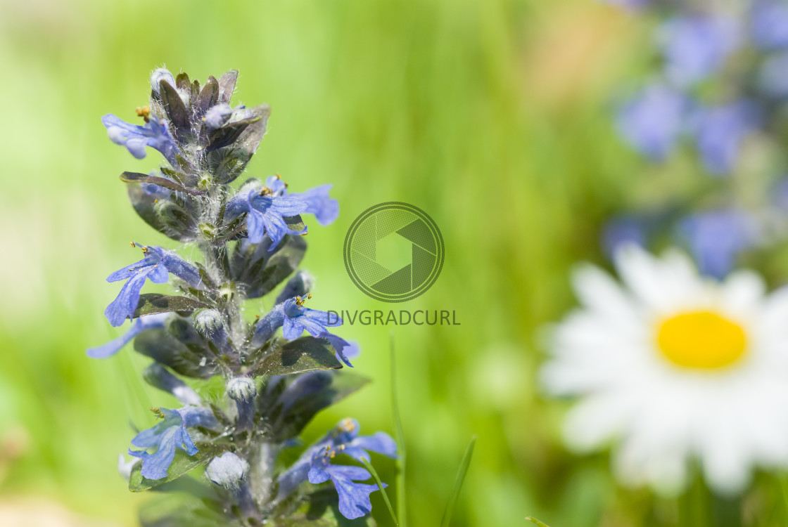 """springtime wildflowers"" stock image"