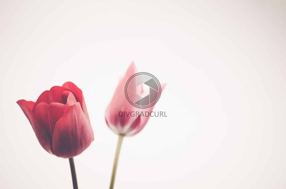 """floral theme backdrops"" stock image"