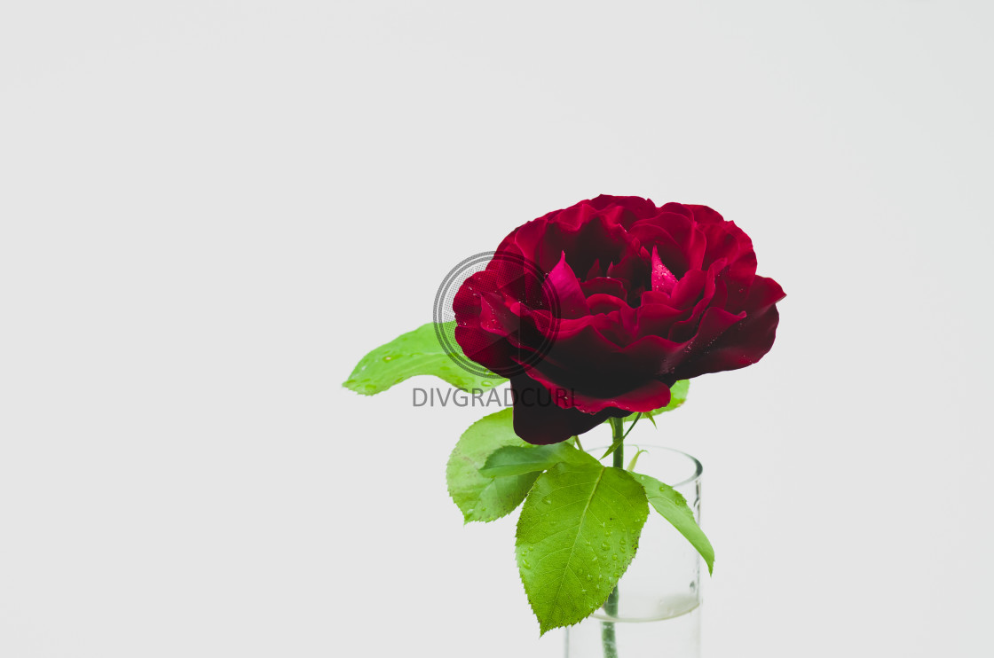 """floral still life backdrop"" stock image"