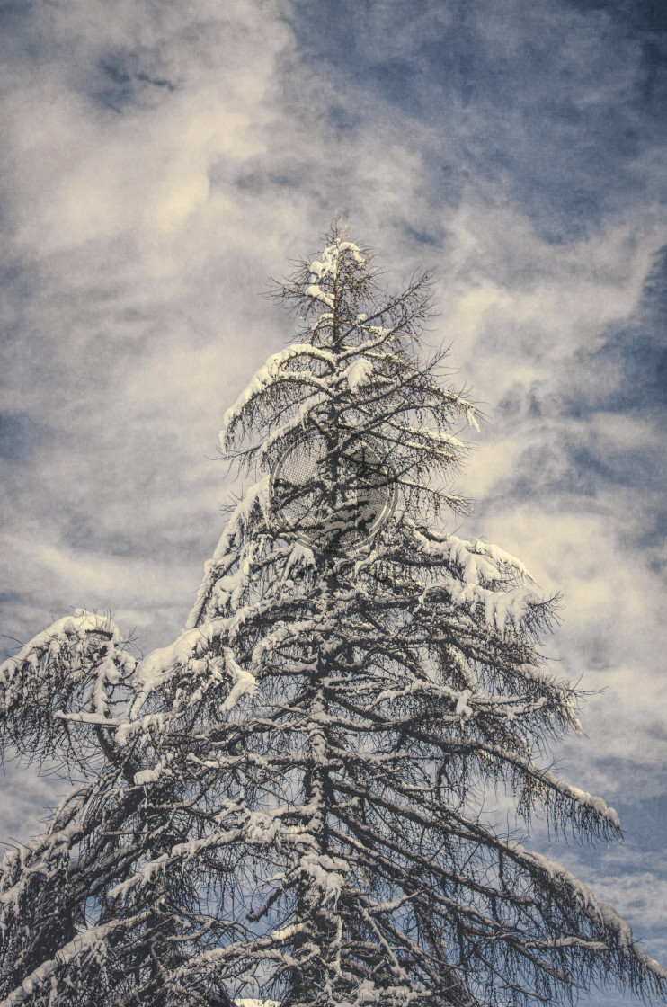 """wintertime nature"" stock image"