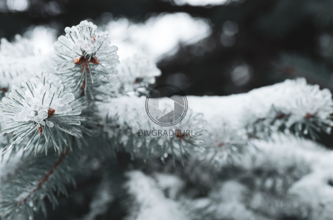 """""""wintertime frosty nature"""" stock image"""