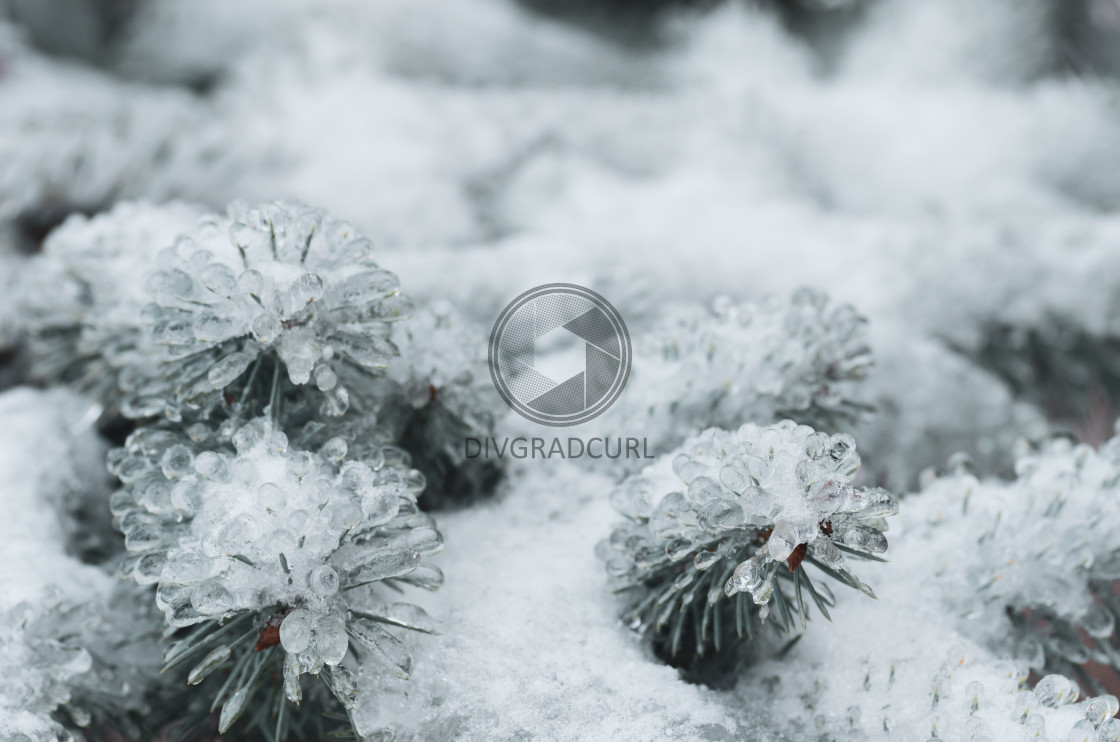 """wintertime frosty nature"" stock image"