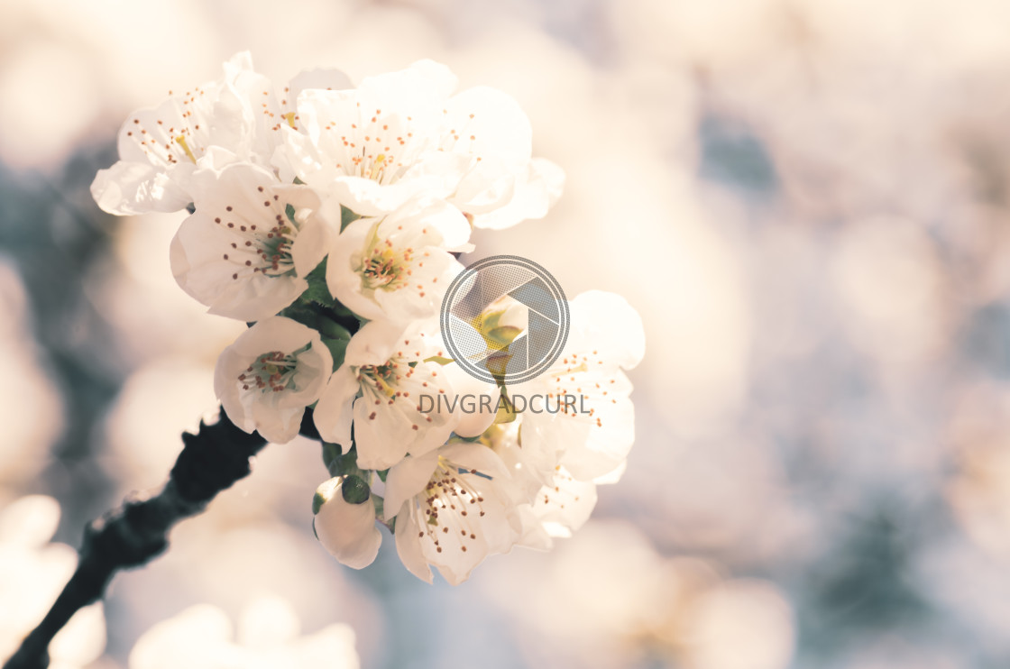 """springtime floral themes"" stock image"