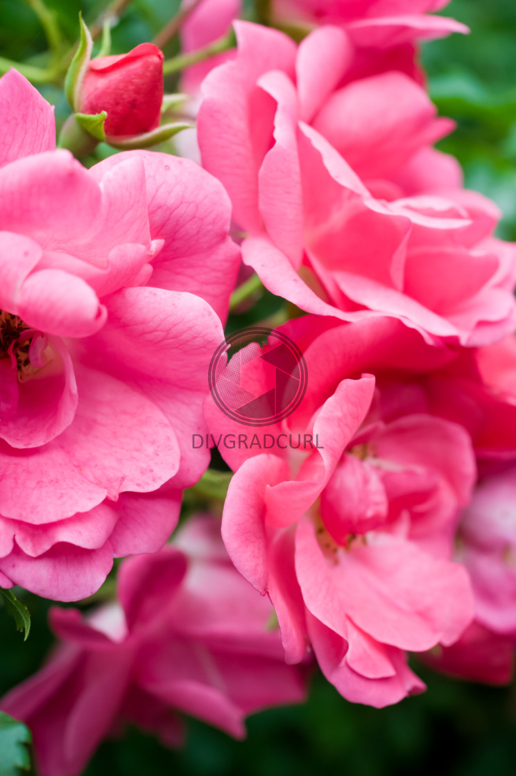 """flowering plants and gardens backdrop"" stock image"