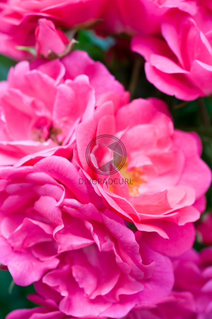 """""""flowering plants and gardens backdrop"""" stock image"""