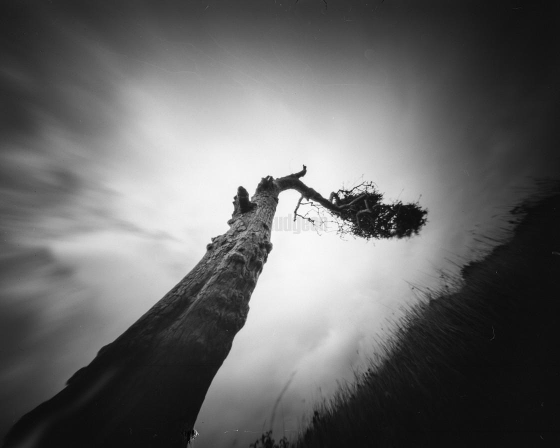 """""""Windswept tree - Pinhole photo"""" stock image"""