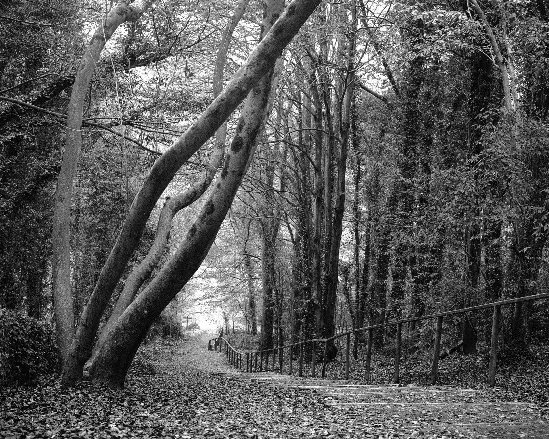 """""""South downs way, Friston forest West dean."""" stock image"""