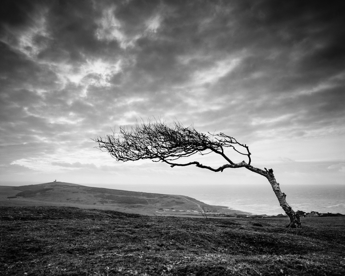 """""""Windswept tree on Went Hill - East Sussex"""" stock image"""