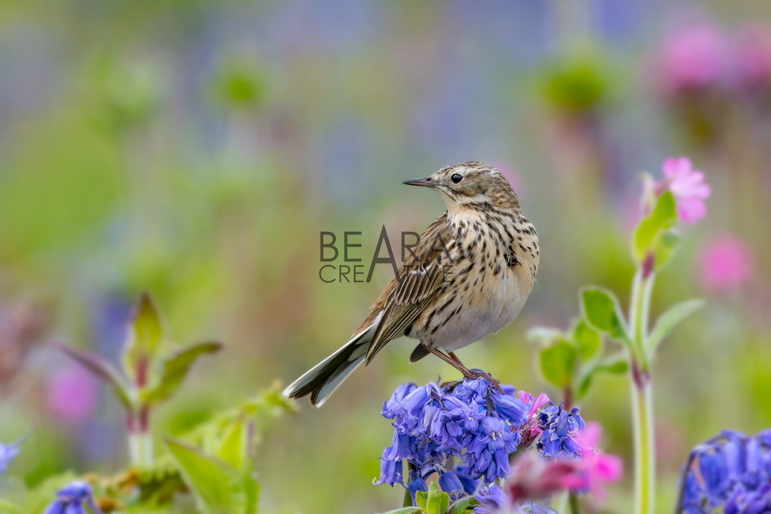 """Bird in flower meadow"" stock image"