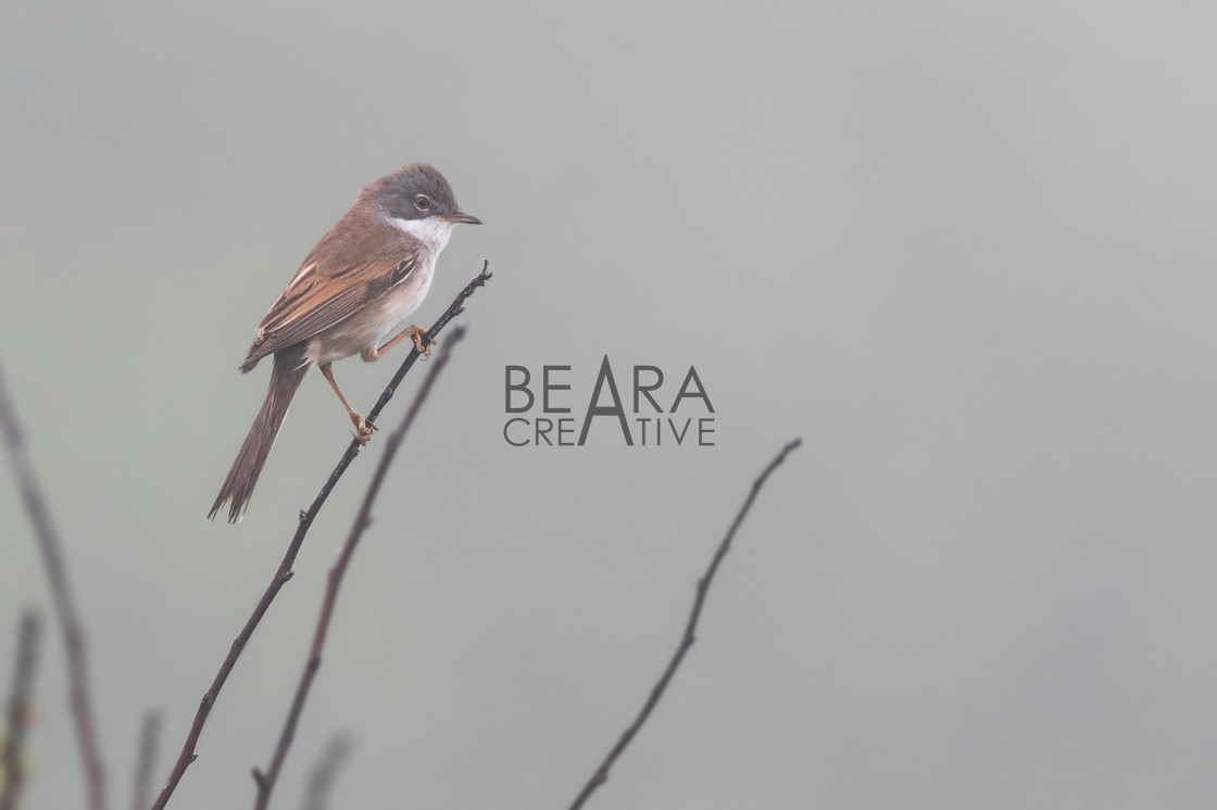 """Bird in mist"" stock image"