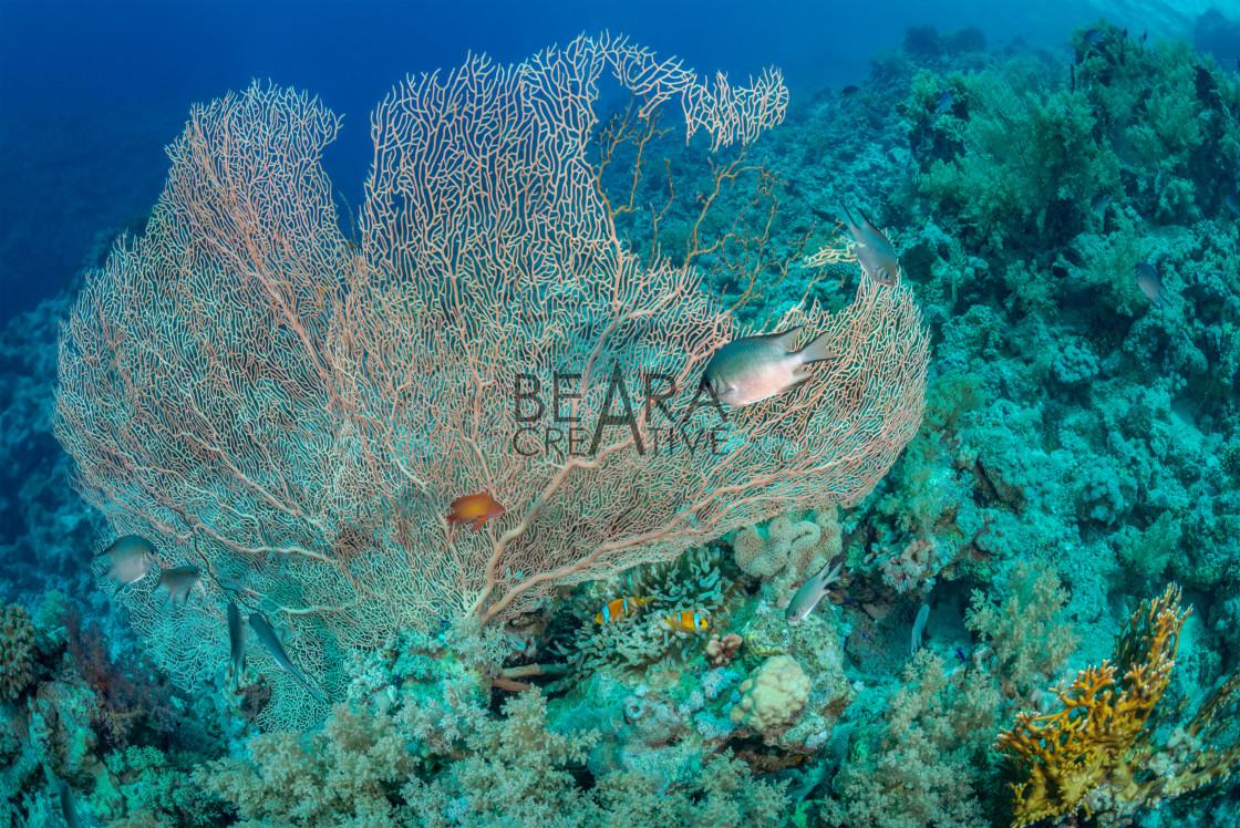 """Sea fan habitat"" stock image"