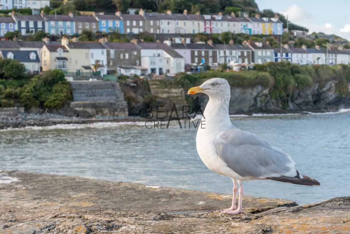 """Seagull coastal village"" stock image"