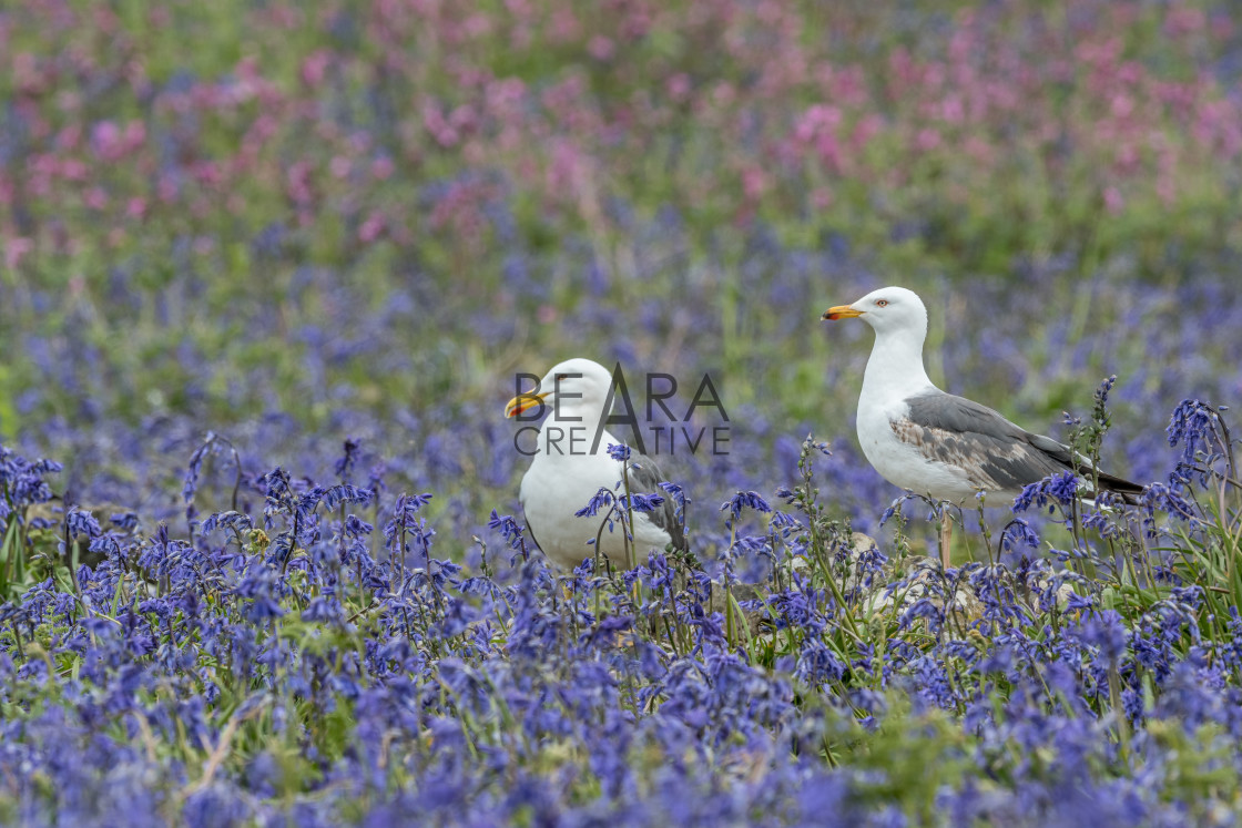 """""""Seagull flower landscape"""" stock image"""