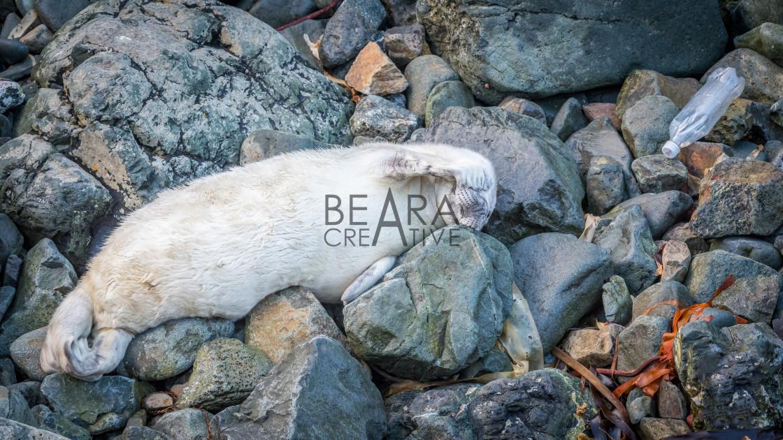 """""""Seal Marine plastics"""" stock image"""