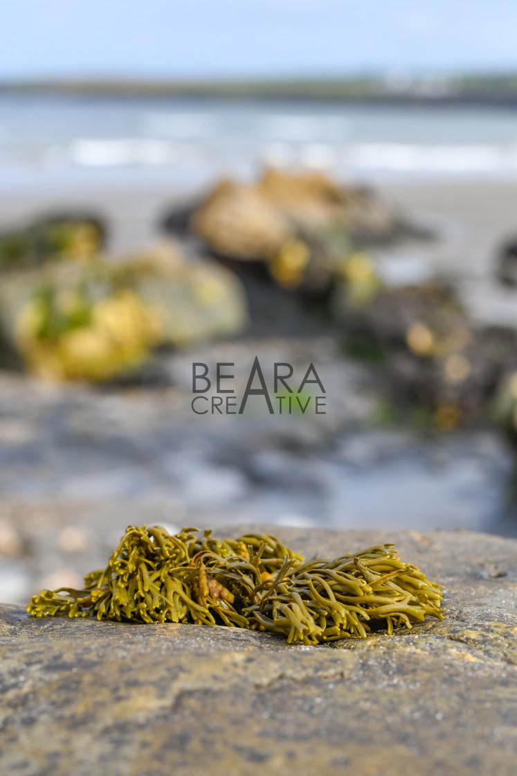 """Seaweed blur"" stock image"