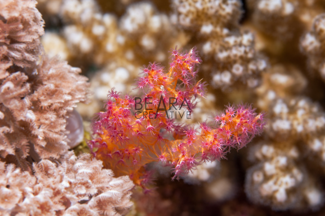 """""""Soft coral detail"""" stock image"""