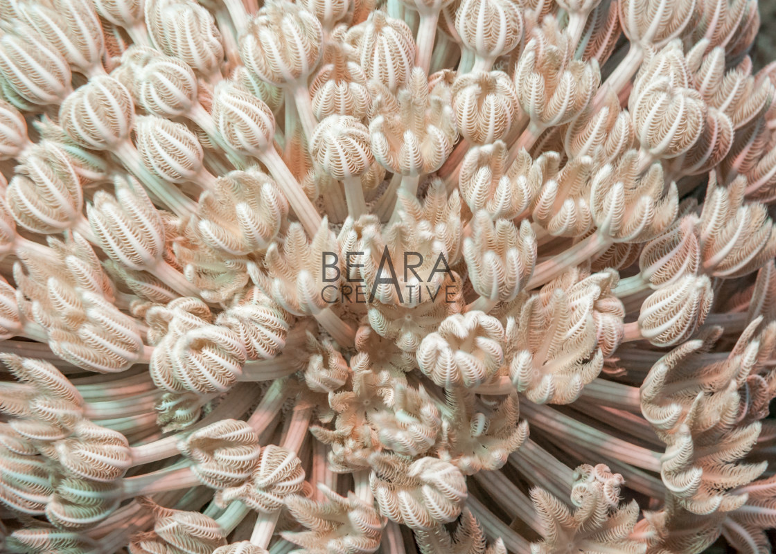 """""""Pulsating soft coral"""" stock image"""