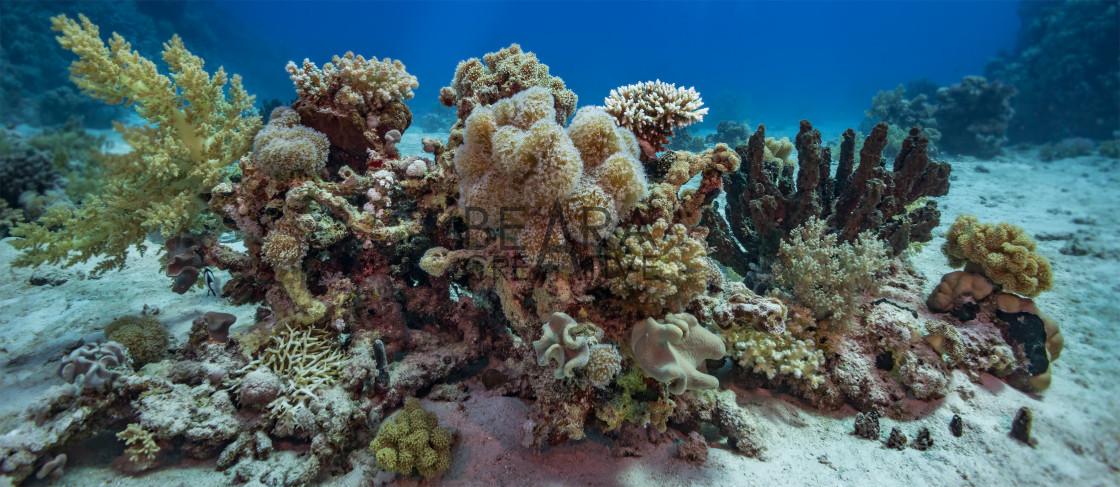 """Coral reef garden scene"" stock image"