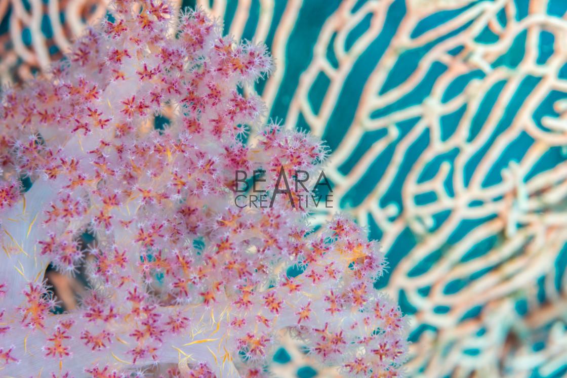 """""""Sea fan soft coral"""" stock image"""