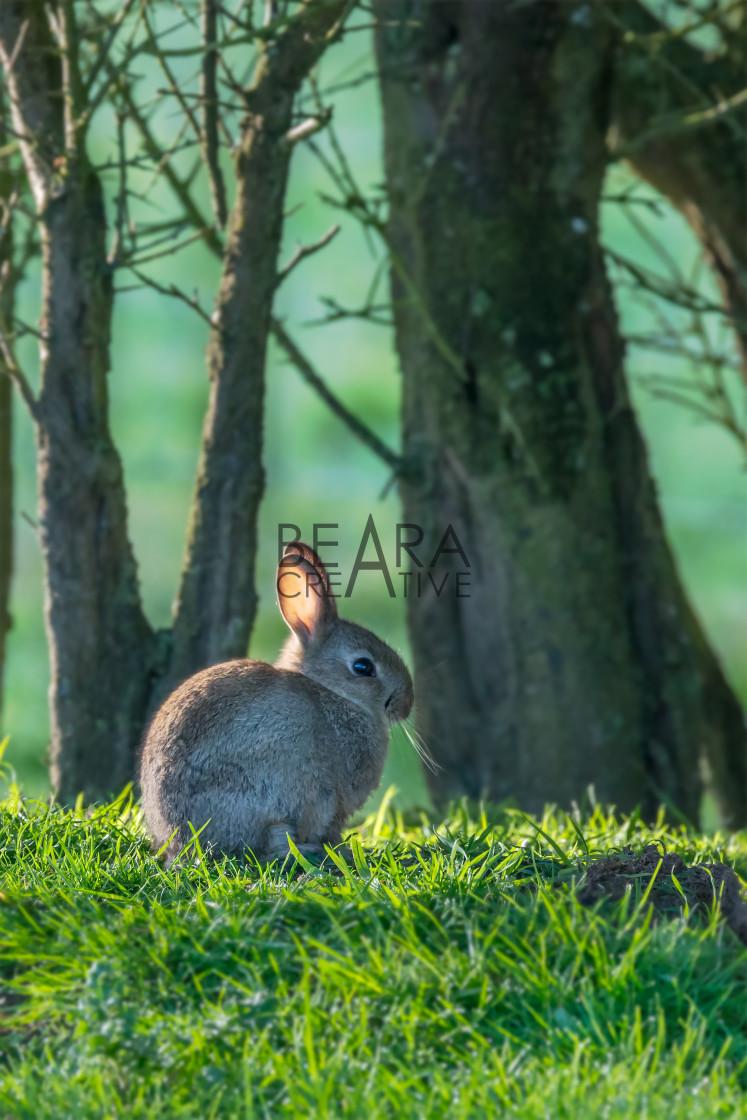 """Individual rabbit at easter"" stock image"