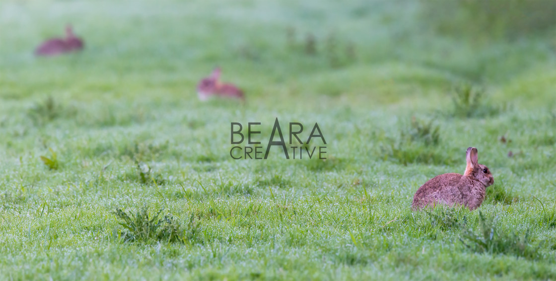 """""""Three rabbits in Spring meadow"""" stock image"""