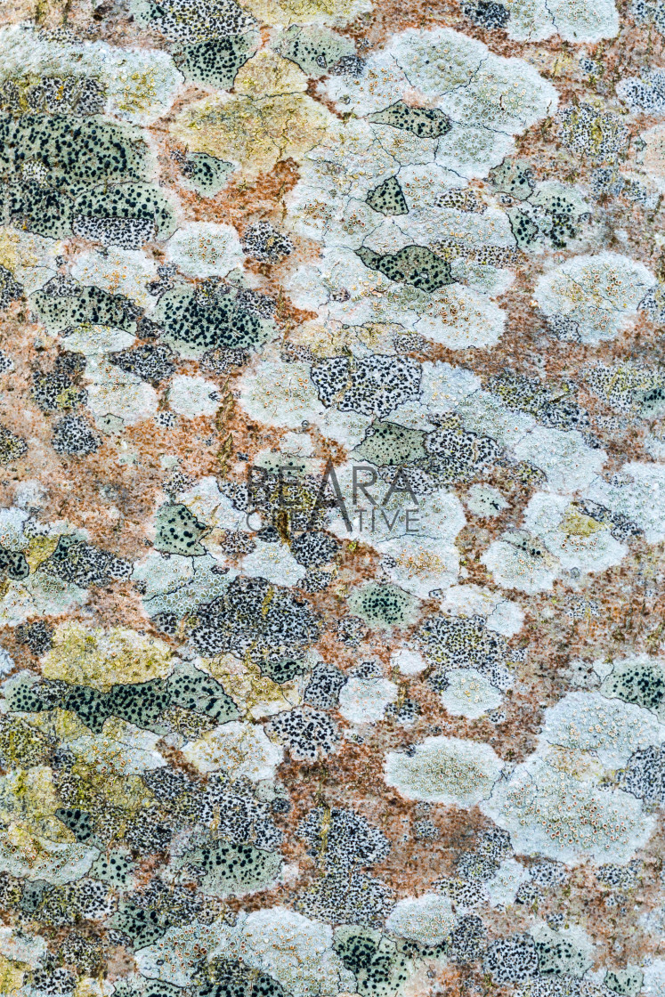 """Tree lichen pattern"" stock image"