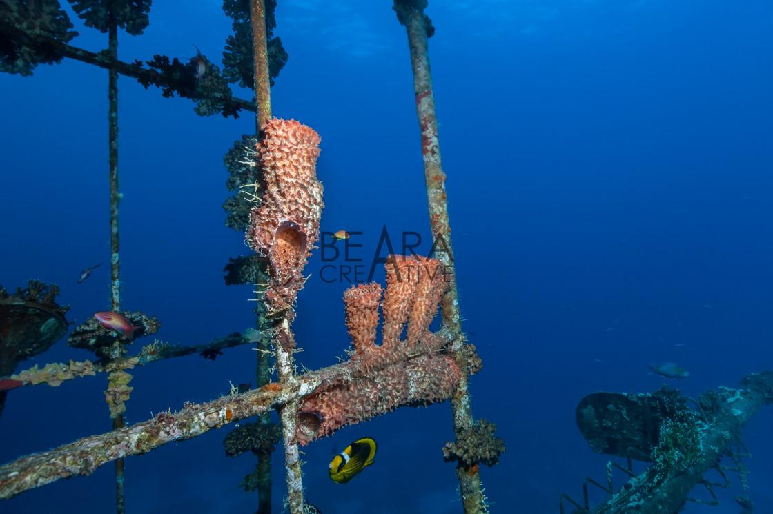 """Wreck sponges"" stock image"